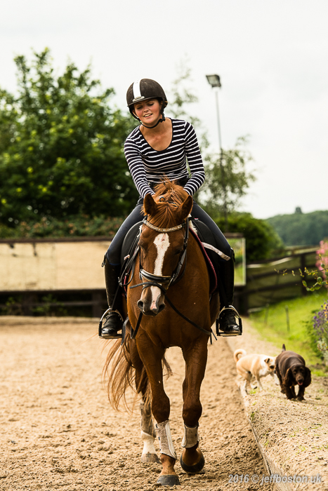 Equestrian-11