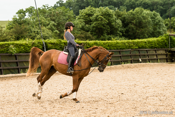 Equestrian-4